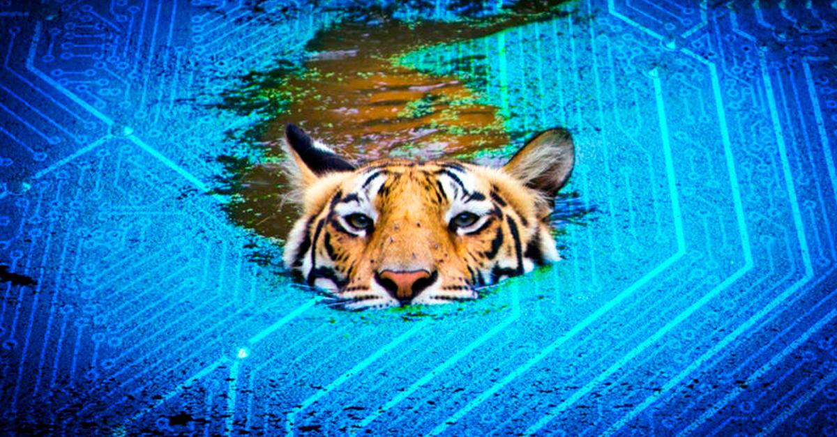 Tiger-Lake